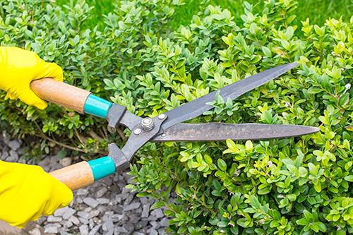 植栽管理・伐採・枝落しなど